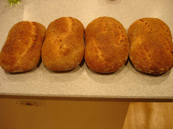 Test Fermentations 1-4 From Left to Right - Crust