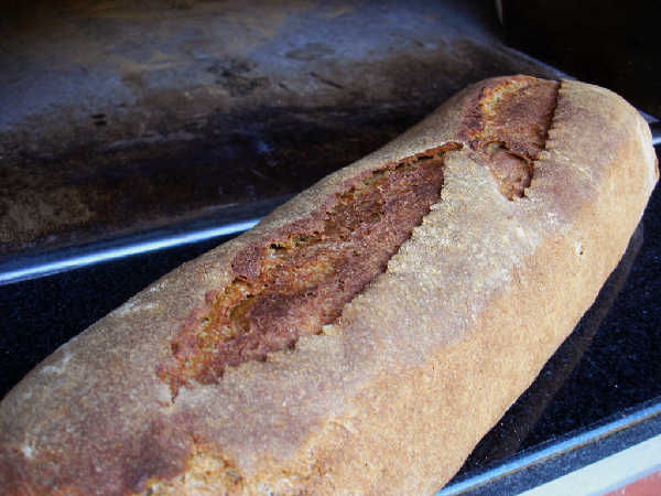 Whole Wheat Mash Bread Just Baked